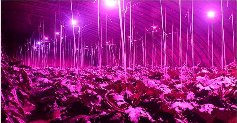 full-spectrum-red-660nm-blue-460nm-ir-750nm-uv-395nm-white-10000k-e27-led-plant-grow-light-bulb-garden-flower-hydroponics-lamp